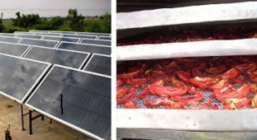 India: Solar Air Drying gives a major Edge to Vegetable Farmers